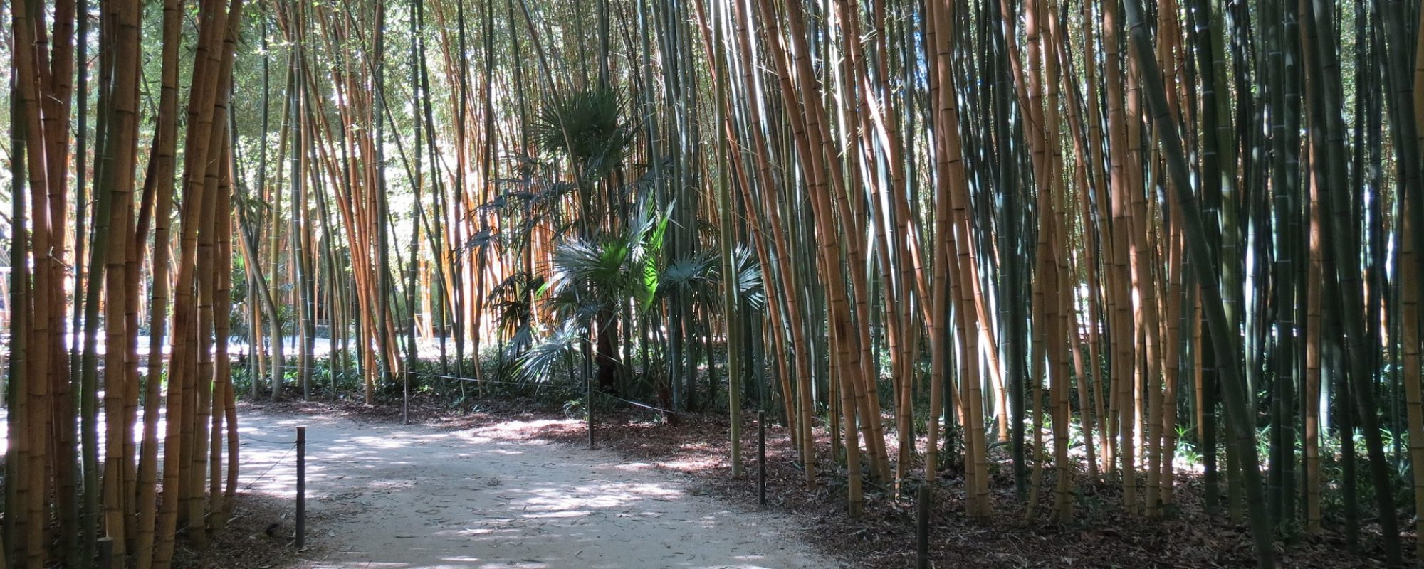 bamboo-1808076_1920