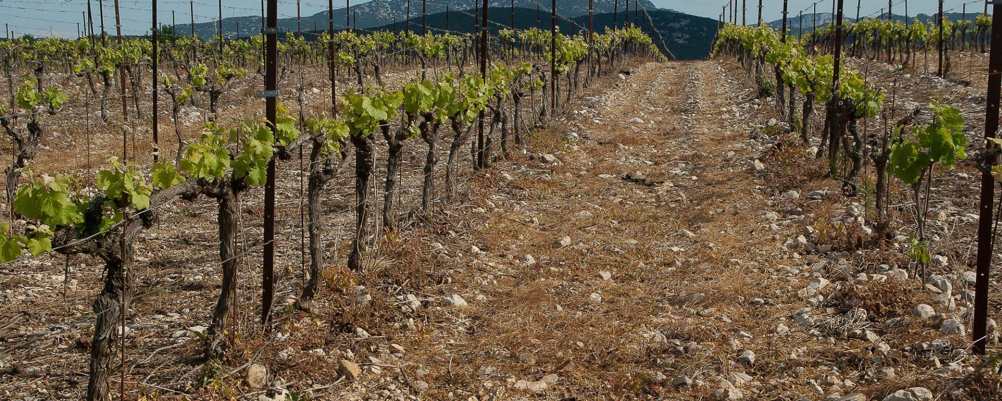 vineyard-1371348_1920